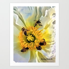 Let Me Be Your Honey Bee Art Print