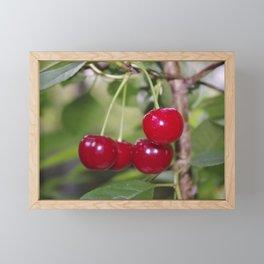 Cherries, fresh on the tree Framed Mini Art Print