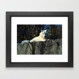 Sentinel: Arctic Wolf Framed Art Print