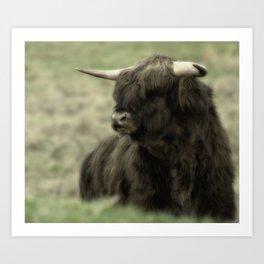 Highland Cattle II Art Print