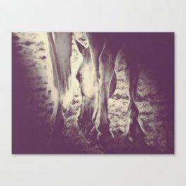 Horseshoes by GEN Z Canvas Print