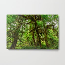 Hall of Mosses - Olympic National Park Metal Print