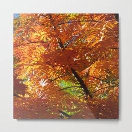 Fallbeauty/Orange Foliage Metal Print