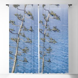 """""""Agave and Pacific"""" by Murray Bolesta! Blackout Curtain"""