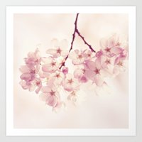 cherry blossoms Art Prints featuring cherry blossoms by Sylvia Cook Photography