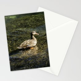 Female Mallard in the Shallows Stationery Cards
