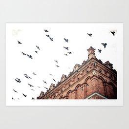 Citys Bird Sanctuary Art Print