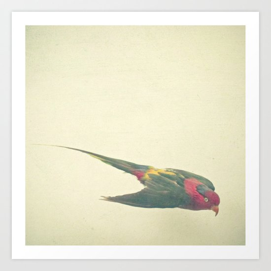 Bird Study #4 Art Print