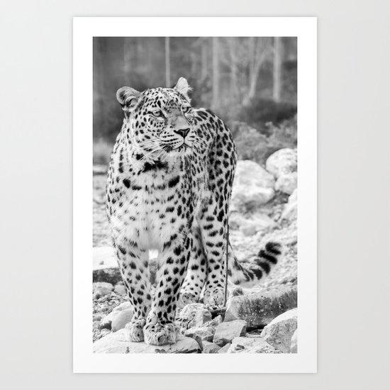 Persian Leopard 2 Art Print