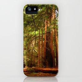 Muir Woods Walkway iPhone Case