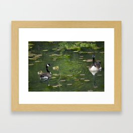 family of birds Framed Art Print