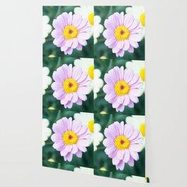 Soft Pink Marguerite Daisy Flower #1 #decor #art #society6 Wallpaper