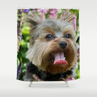 yorkie Shower Curtains featuring Happy Yorkie by IowaShots