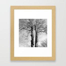 Pair of Trees (Black and White) Framed Art Print