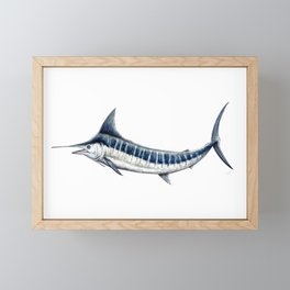 Blue Marlin (Makaira nigricans) Framed Mini Art Print