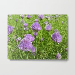 purple chive bloom VI Metal Print