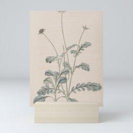 Flower 717 scabiosa webbiana13 Mini Art Print
