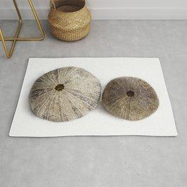 Sea Urchin Shells Rug