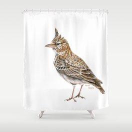 Galerida cristata, Crested lark traditional artwork Shower Curtain