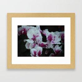 Bearded Iris Flowers Framed Art Print