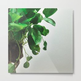 The Avant-Garden Forage || Watercress  Metal Print