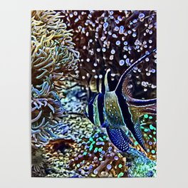 Reef and Fish Poster