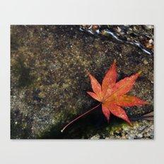 Japanese Maple Leaf 1 Canvas Print