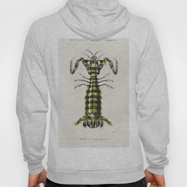 Giant mantis shrimp (Squilla Maculata) illustrated by Charles Dessalines D Orbigny (1806-1876) Hoody