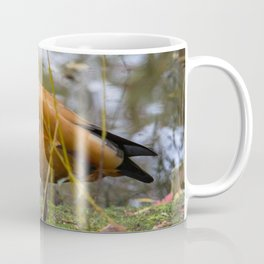 Tadorna Ferruginea Coffee Mug