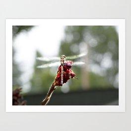 My Dragonfly Wings Art Print