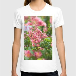 Aesculus red blossom cluster T-shirt