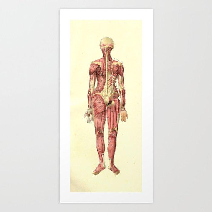 Human Female Muscle Anatomy Print Art Print By Aburnski Society6