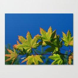 Hands of Autumn Canvas Print