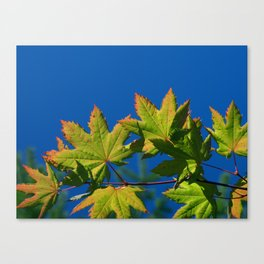 Hands of Autumn Canvas Print