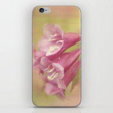 Summer Pink iPhone & iPod Skin