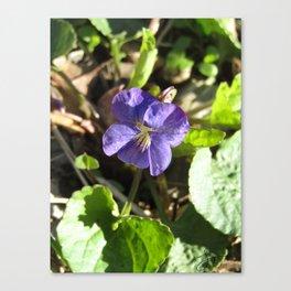 Victorious Violet Canvas Print