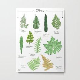 Ferns n.2 species collection botanical illustration Metal Print
