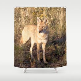 Watercolor Coyote 09, Chasing the Setting Sun Shower Curtain