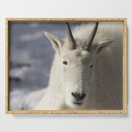 White Rocky Mountain Goat. Serving Tray