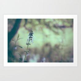 Bluestone Perennials Art Print
