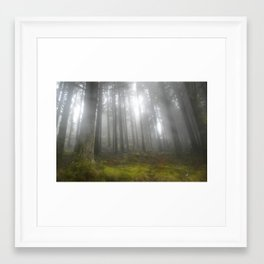 Fog in the undergrowth Framed Art Print