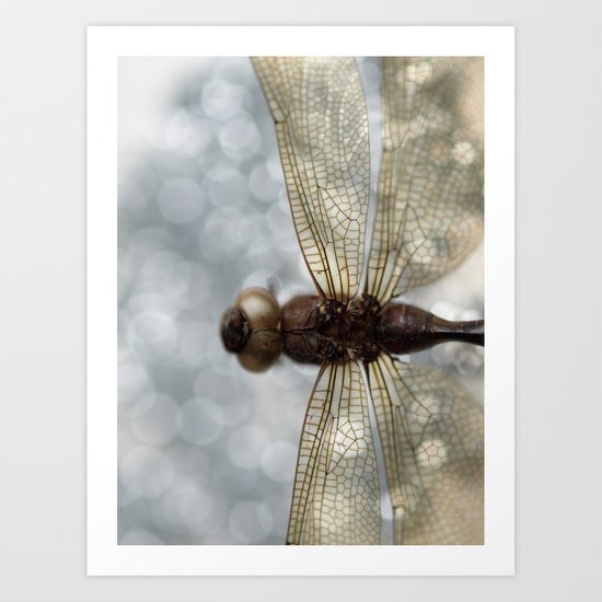 Dragonfly In The Mist... Art Print