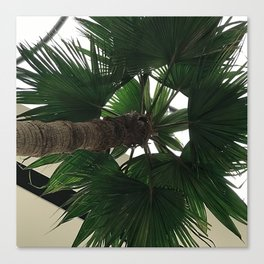 Forest Green Palm Tree Upshot Photo Canvas Print