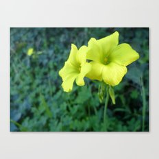Singing in Yellow Canvas Print