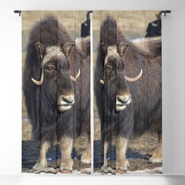 Arctic Muskox Blackout Curtain