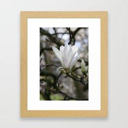 real magnolias Framed Art Print