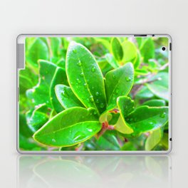 Manzanita III Laptop & iPad Skin