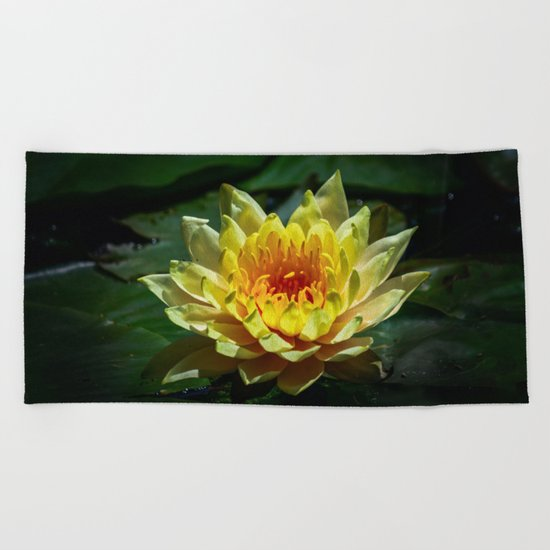 Yellow water lily Beach Towel