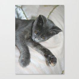 Cute Grey Kitten Relaxing  Canvas Print