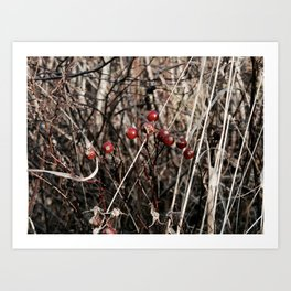 Thorned Berries of Winter Art Print